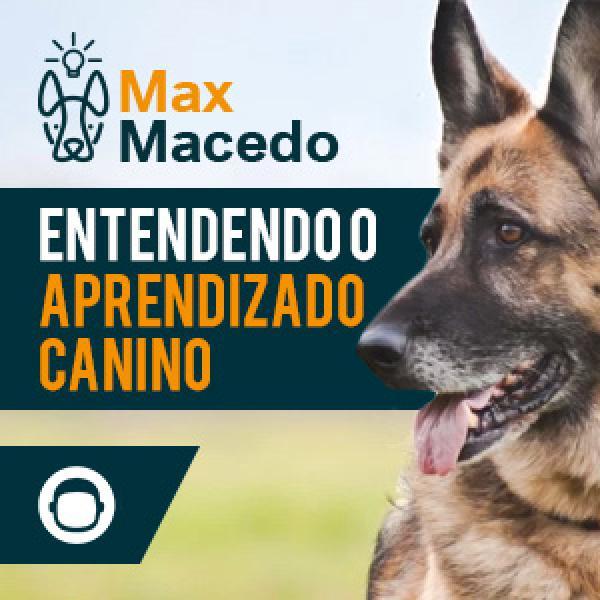 Entendendo o Aprendizado Canino: O Guia Definitivo!